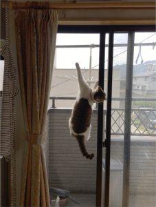 shinji_fujimoto01